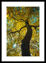 Load image into Gallery viewer, Sweet Sweet Chestnut Tree