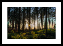 Load image into Gallery viewer, Sunset at Tentsmuir Wildlife Reserve