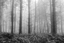 Load image into Gallery viewer, Forest, Ferns and Fog