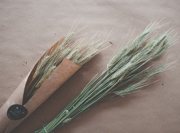 Bunch of Natural Dried Barley