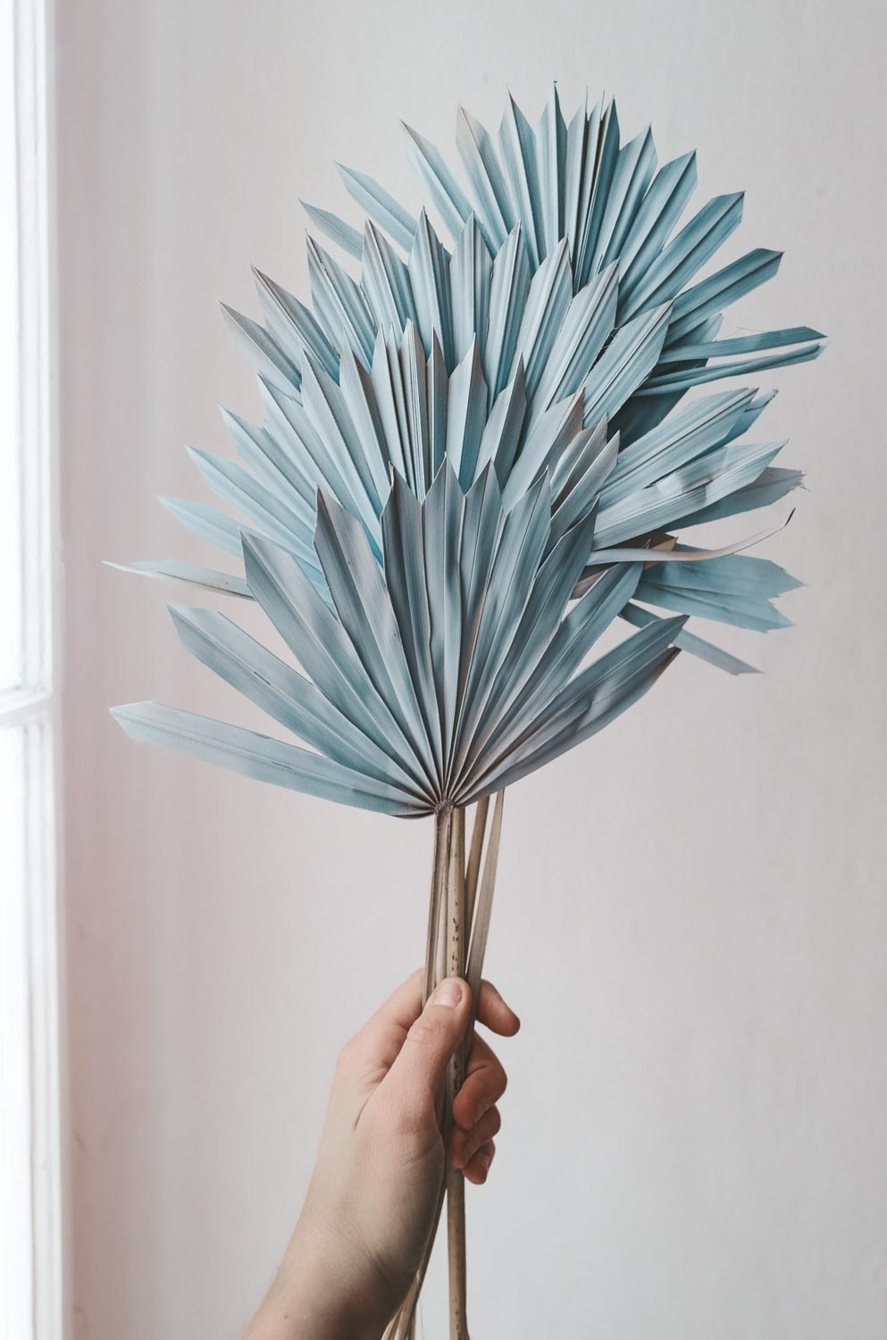 Bundle of Pastel Blue Palm Suns