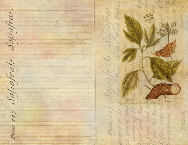 The Herbal Companion Digital Journal Kit