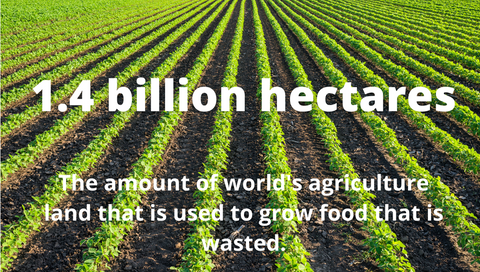 1.4 billion hectares of world's agriculture land used to grow food that is wasted