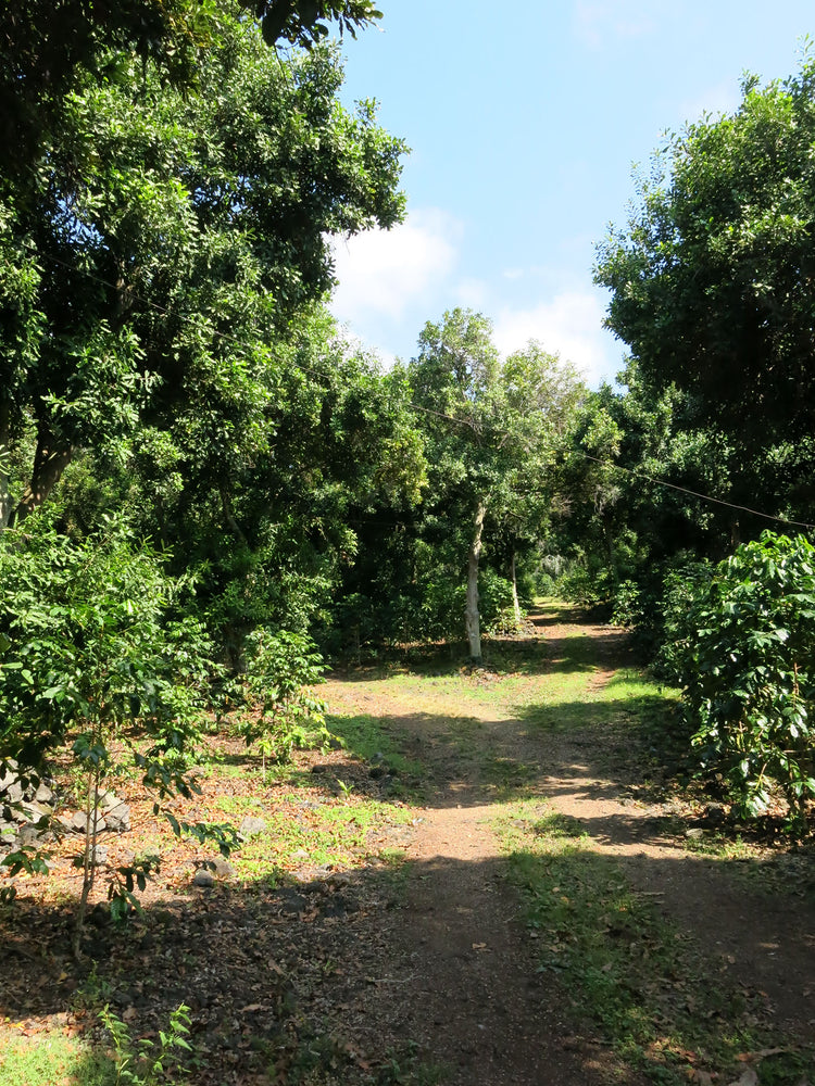 On Macadamia Nuts and Organic Certification