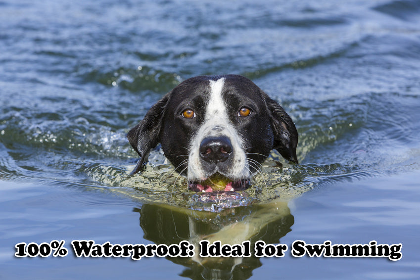 waterproof dog