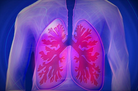 lungs copd disease