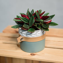 Load image into Gallery viewer, Mini plant in cement and leather pot