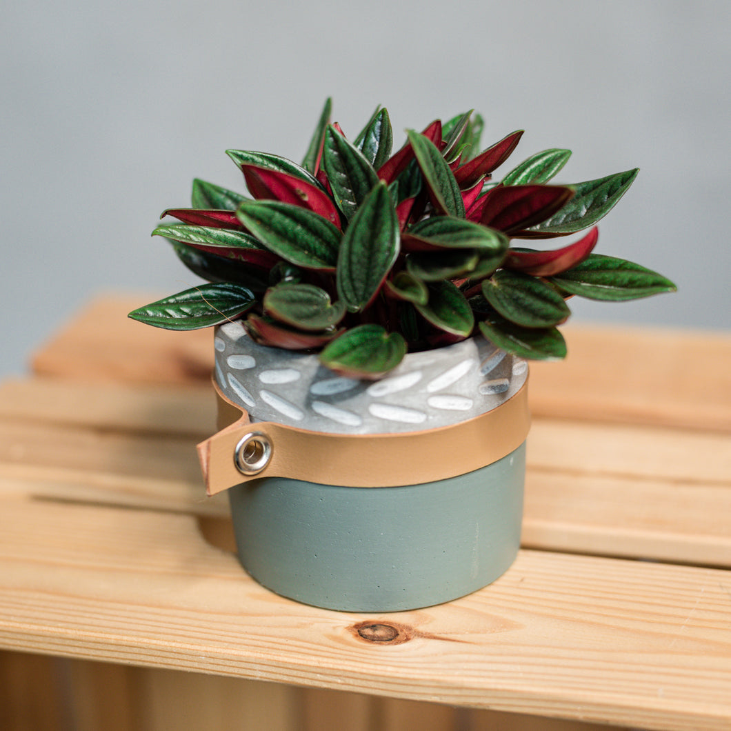 Mini plant in cement and leather pot