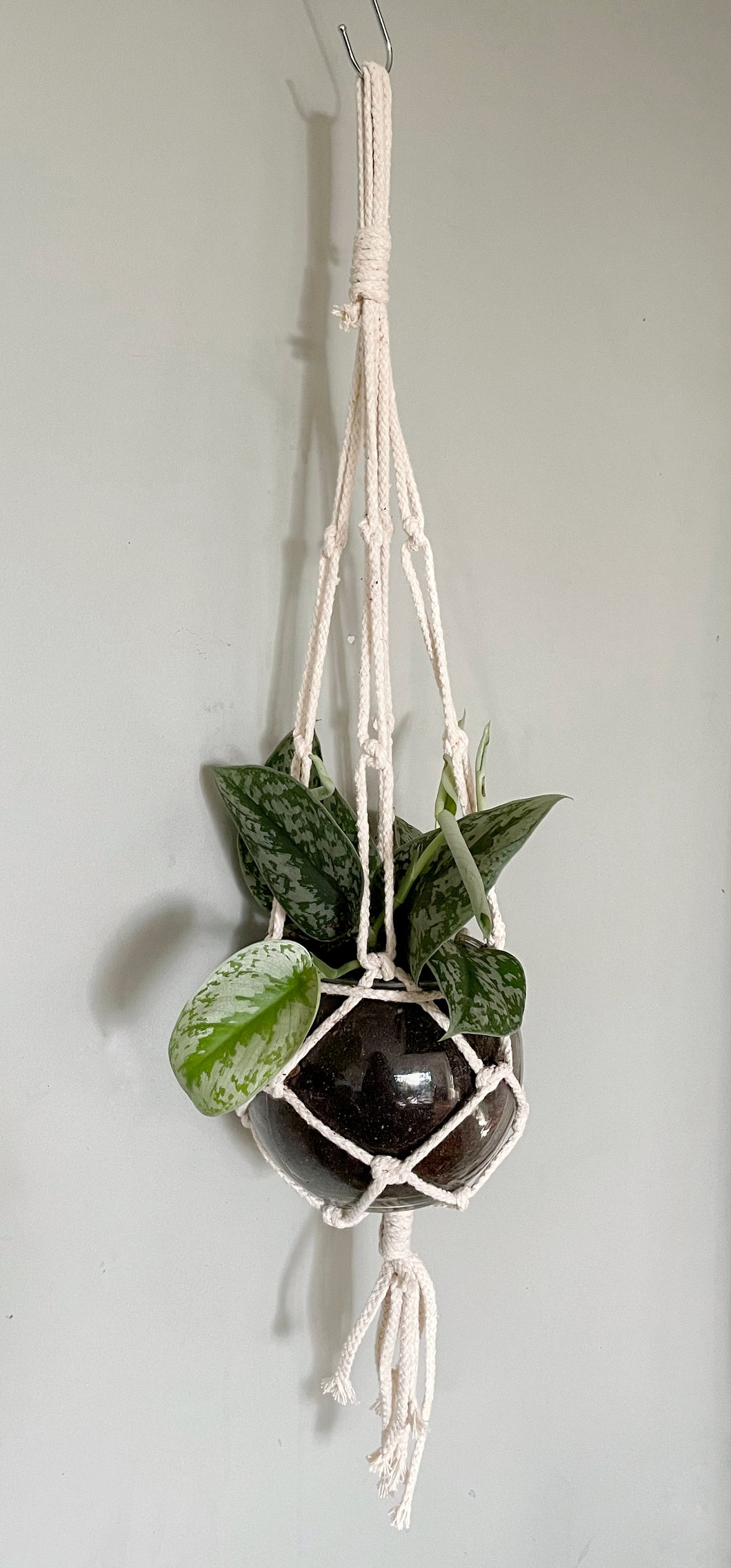 Satin Pothos in Glass pot with Hanger