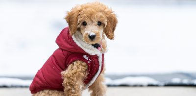 Best Styles to Keep Your Dog Warm in the Winter