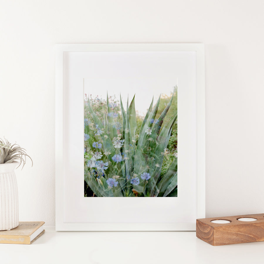 Stories of Water Double Exposure Cactus and Flowers 8x10 Art Print