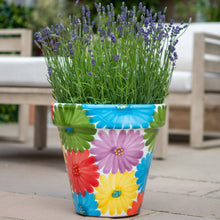 "Load image into Gallery viewer, Multiflor Planter - 12""W x 11""H"