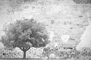 INSTABILELAB - ilmezzomancante - The Tree and the Wall