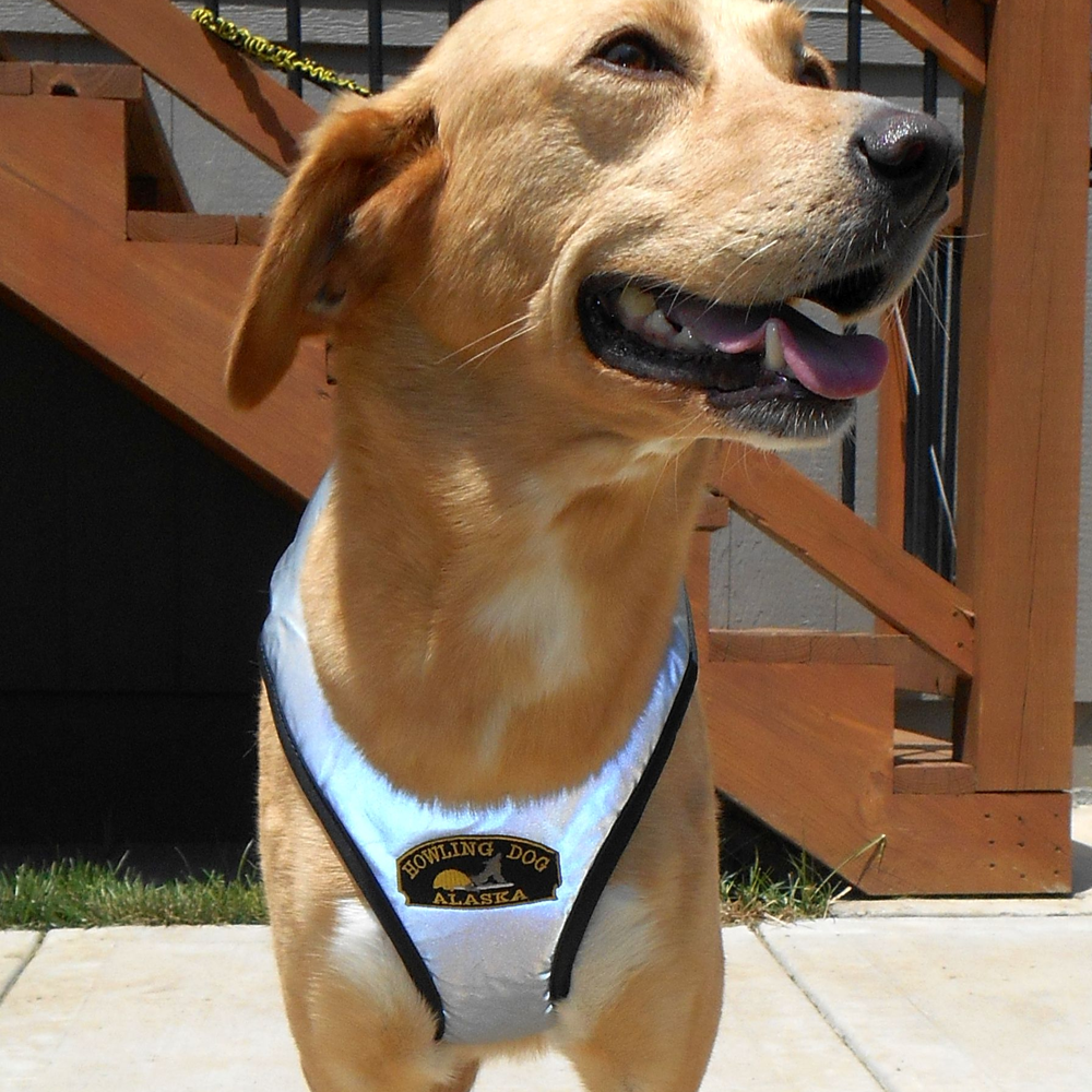 Flash™ Harness – Howling Dog Alaska
