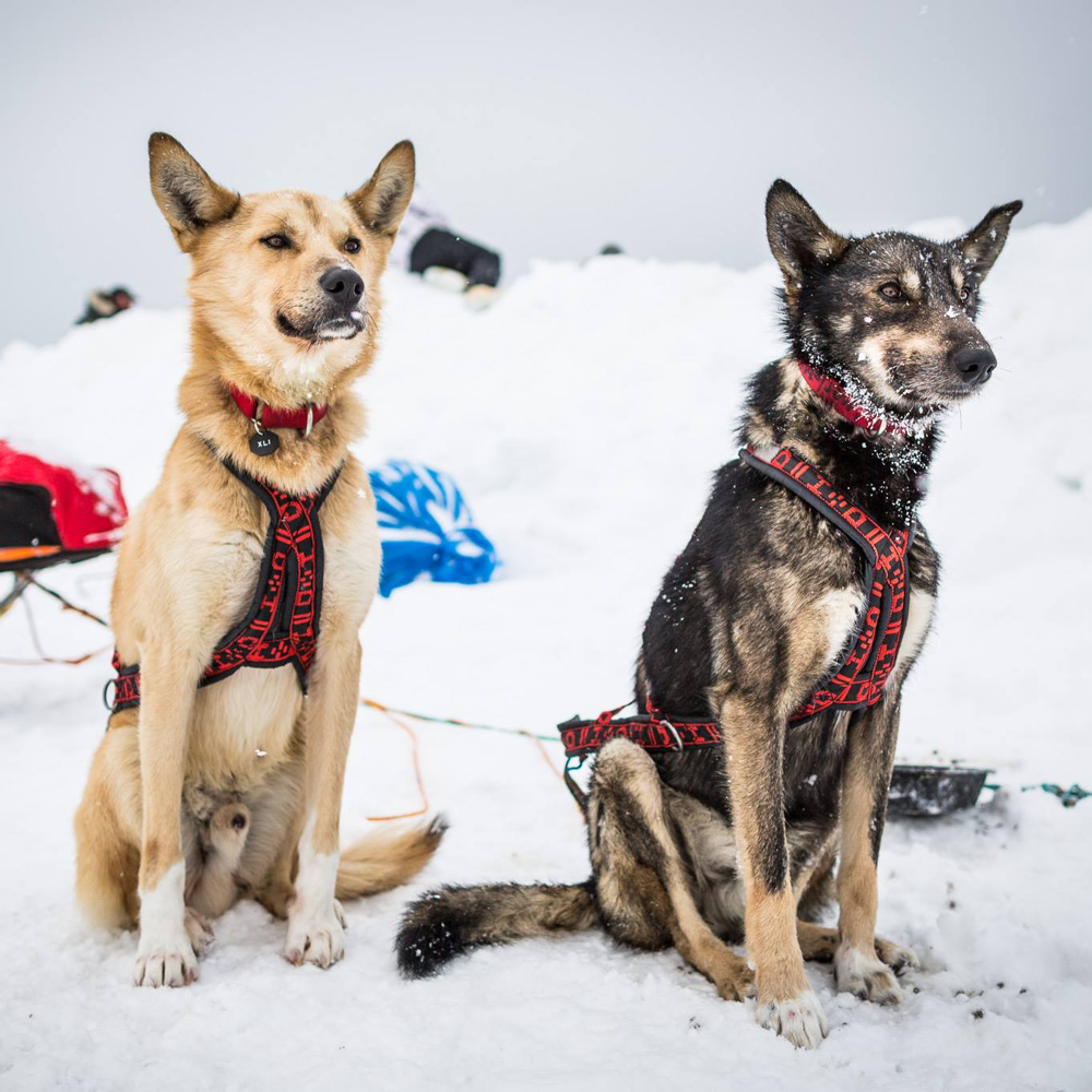 Hybrid Light Weight Harness - Howling Dog Alaska