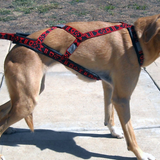 Light Weight Harness - Howling Dog Alaska