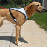 Flash™ Harness - Howling Dog Alaska