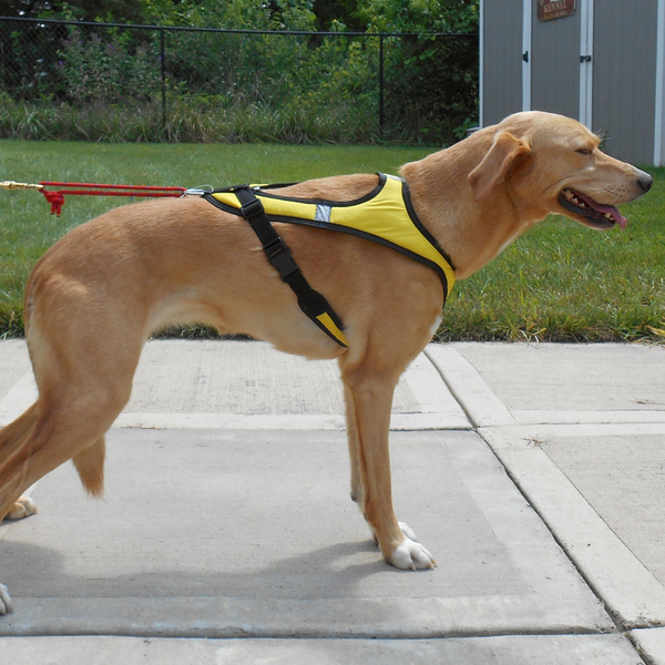 Tough Skin™ Harness ULTRA - Howling Dog Alaska