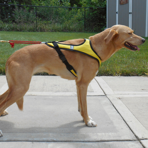Tough Skin™ Harness ULTRA