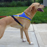 Tough Skin™ Harness - Howling Dog Alaska