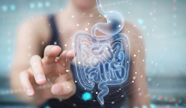 "A Deep-Dive Into ""Gut Health"", And How To Improve It"