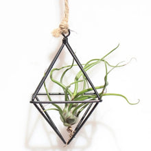 Laad de afbeelding in de galerijviewer, Hanging Air Plant Stand - Avalon - Gifts, Antiques & Plants