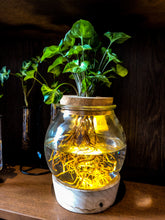 Laad de afbeelding in de galerijviewer, Glowing Hydroponics - Large Bulb - BL series - Avalon - Gifts, Antiques & Plants