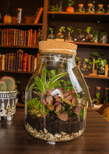 Laad afbeelding in Gallery viewer, Eco System in a Bottle - Alleen Amsterdam - Avalon - Gifts, Antiques & Plants