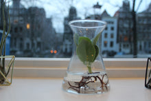 Laad afbeelding in Gallery viewer, Hydroponics in a Pharmacy Bottle - AT series - Avalon - Gifts, Antiques & Plants