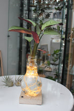 Laad de afbeelding in de galerijviewer, Hydroponics Glowing Bulb on a light stand - SB series - Avalon - Gifts, Antiques & Plants