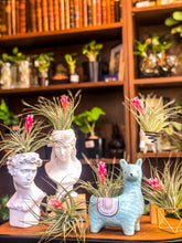 Laad afbeelding in Gallery viewer, Llama Plant Pots - Avalon - Gifts, Antiques & Plants