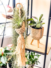 Laad afbeelding in Gallery viewer, Macrame Air plant hanger - Avalon - Gifts, Antiques & Plants