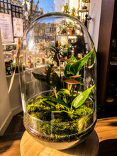 Laad afbeelding in Gallery viewer, Anthurium Terrarium - alleen Amsterdam - Avalon - Gifts, Antiques & Plants