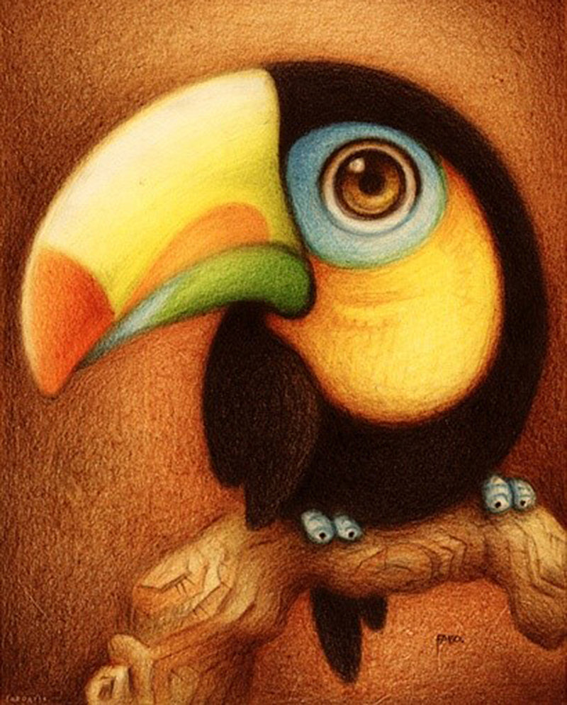 Big Eyed Toucan