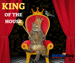 Cat Sitting In King Chair
