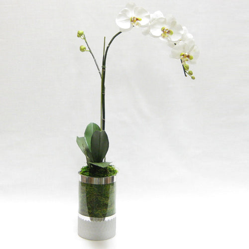 Cylinder Glass Vase Silver - White & Green Orchid Artificial