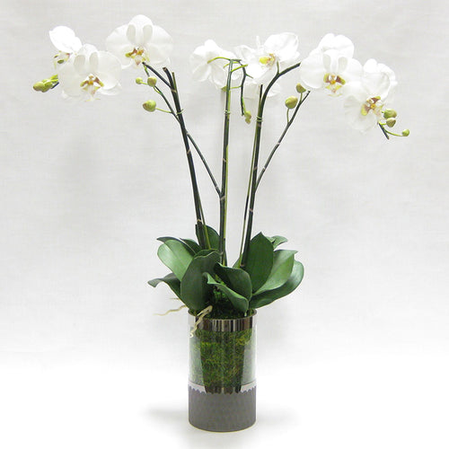 Cylinder Glass Vase Smoke - White & Green Orchid Artificial - 3 Stems