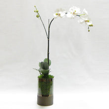 Load image into Gallery viewer, Cylinder Glass Vase Smoke - White & Green Orchid Artificial