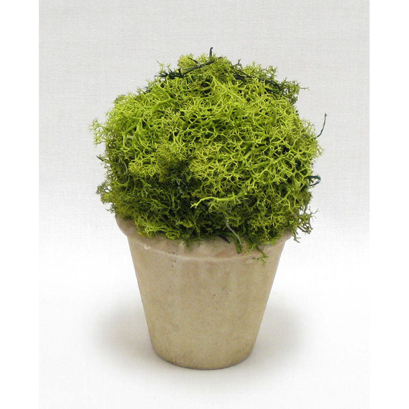 Ceramic Container - Reindeer Moss Topiary Ball