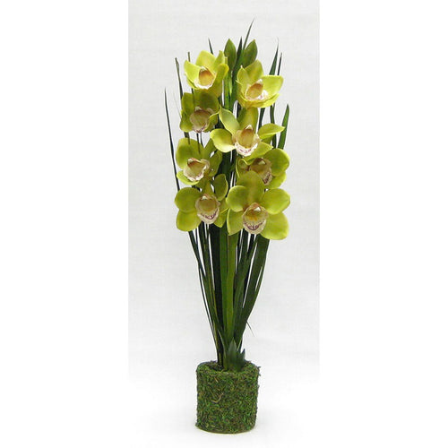 Drop In Cymbidium Orchid Green Artificial in Moss Pot