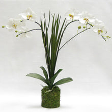 Load image into Gallery viewer, Drop in White & Green Double Orchid Artificial with Natural Palm Foliage in Moss Pot