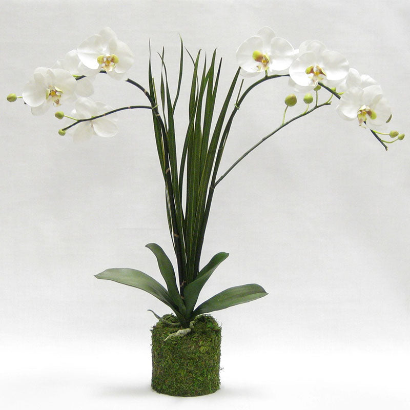 Drop in White & Green Double Orchid Artificial with Natural Palm Foliage in Moss Pot