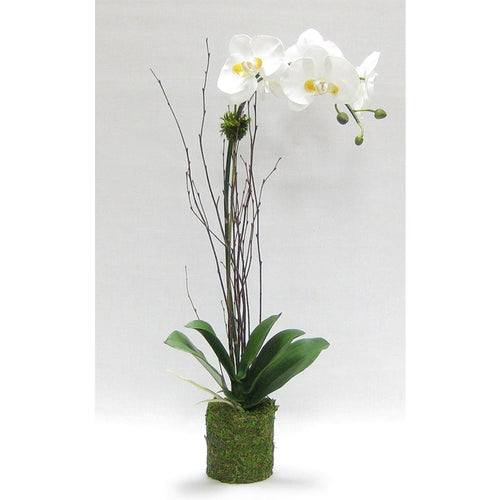 Drop in White & Yellow Orchid Artificial in Moss Pot (Set of 2 - Price per Piece)