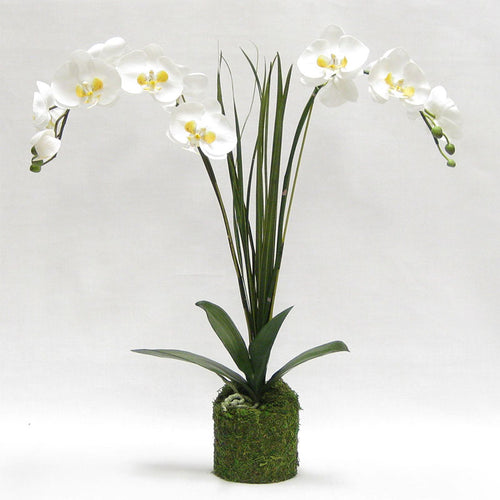 Drop in White & Yellow Double Orchid Artificial with Natural Palm Foliage in Moss Pot