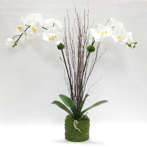 Drop in White & Yellow Double Orchid Artificial in Moss Pot