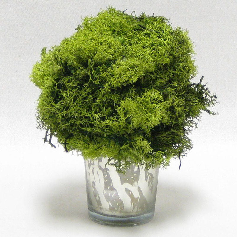 Mercury Glass Votive - Reindeer Moss, Topiary Ball Basil