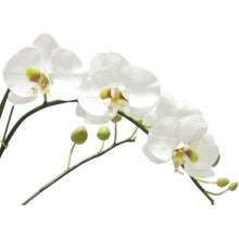 Load image into Gallery viewer, [WRPL-GG-ORGR] Wooden Large Rect Container Grey Green  - White & Green Orchid Artificial