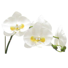 Load image into Gallery viewer, [WSPM-GG-ORYEDP] Wooden Square Container w/ Medallion Gray/Green - Double White & Yellow Orchid Artificial w/ Palm