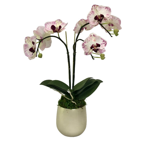 Resin Round Container Small Champagne Leaf - Double Orchid Purple & White Artificial