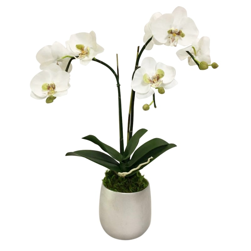 Resin Round Container Small Silver Leaf - Double Orchid Green & White Artificial